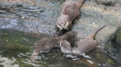 Otters Stock Footage