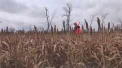 Pheasant Hunting Dog Stock Footage