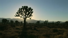 Joshua Tree National Park Stock Footage