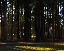 Woodland Stock Footage