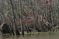 New Orleans Swamp Stock Footage