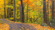 Autumn drive Stock Footage