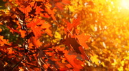 Stock Video Footage of Trees on the wind, beautiful autumn.