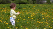 Baby with dandelions on green spring lawn Stock Footage