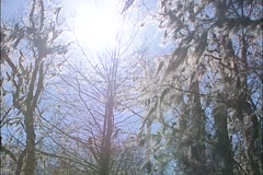 Sunlight swamp Stock Footage