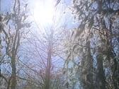 Sunlight swamp Stock Footage