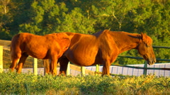 Mare and foal Stock Footage
