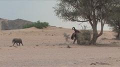 Desert Elephants in Namibia  Stock Footage