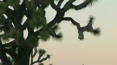 Stock Video Footage of Joshua Tree National Park