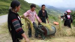 Ethnic minority people thresh harvest crop rice hill-tribe North Vietnam Stock Footage