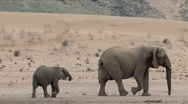 Stock Video Footage of Desert Elephants in Namibia