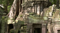 Overgrown Ruins of Ta Phrom temple - stock footage