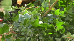 Chainsaw tree branches Stock Footage