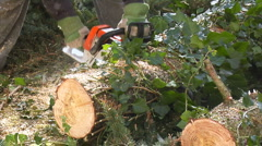 Chainsaw tree slices Stock Footage
