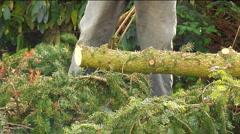 Chainsaw pine tree Stock Footage