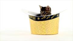 Kitten in a happy new year hat Stock Footage