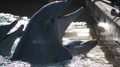 Dolphin Meal Time Stock Footage