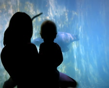 Family Watches Seals (2 Shots) - stock footage