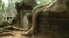 Huge root growing over a wall of an ancient temple Ta Phrom - stock footage
