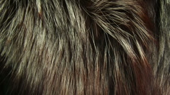 Thick fur Stock Footage