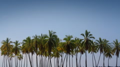 Palm Tree Lineup Stock Footage