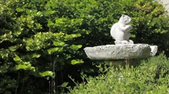 Squirrel Fountain Stock Footage