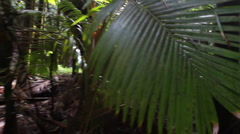 Moving Through Jungle - stock footage