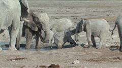 Baby Elephant Stock Footage