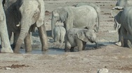 Stock Video Footage of Baby Elephant