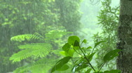 Stock Video Footage of Heavy tropical rain falling down in the jungle.