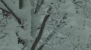 Snowy tree CU Stock Footage