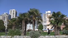 English Bay Palm Trees with Joggers & Walkers Stock Footage