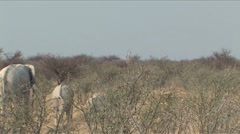 Ghostlike Elephants in Etosha Stock Footage