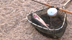 Fisherman removes hook from rainbow trout Stock Footage