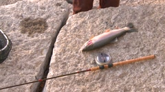 Rainbow trout flops around after being caught by fisherman Stock Footage