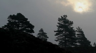 Stock Video Footage of Silhuetted pine trees, sun obscured by clouds