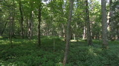 Bialowieza forest in Poland Stock Footage
