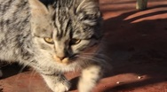 Stock Video Footage of Funny kitten