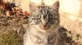 Funny kitten HD Footage
