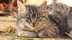 Sleepy kitten Stock Footage