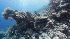 Underwater scenery next to the reef. Stock Footage