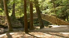 Bridge and trees Stock Footage