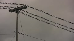 Stock Video Footage of Birds on a Wire