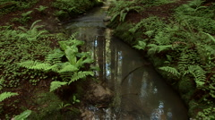 Stream running through forest floor Stock Footage
