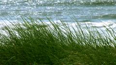 Sea Grass Stock Footage
