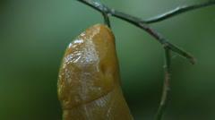 Slug - stock footage