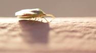 Creepy Green Bug  Stock Footage