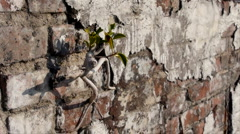 Tree Grows In wall Diagonal Dolly Stock Footage