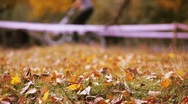 Yellow leafs on the grass and bicycles. Autumn Stock Footage