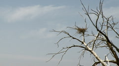 Dead Tree With Bird Nest Stock Footage